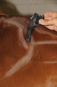 Dieses Foto zeigt ein Kopfeisen mit nach vorn gerichteten Ortspitzen, die auch dann auf den Schulterknorpel drücken, wenn der Sattel korrekt hinter dem Schulterblatt aufliegt.