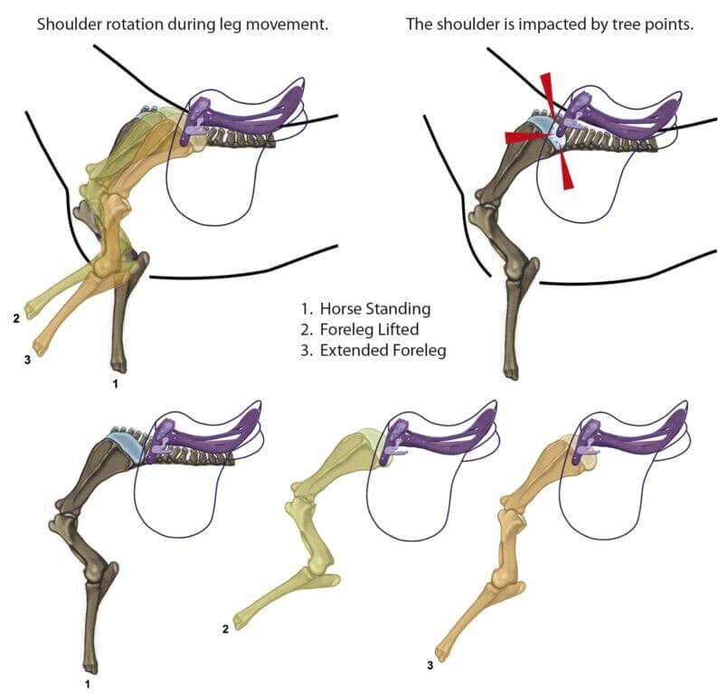 Schulterblattrotation